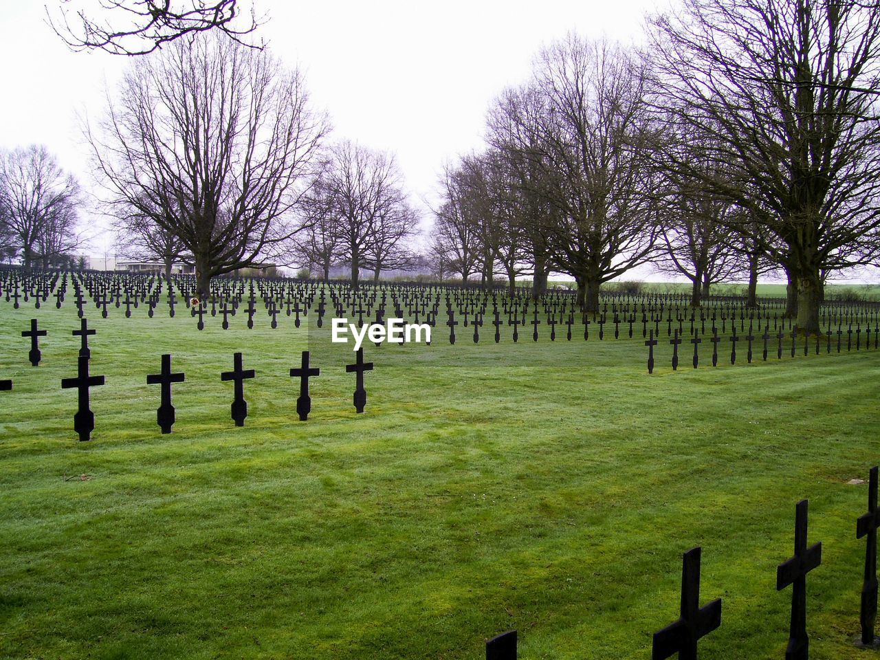 tree, plant, grass, cemetery, no people, grave, nature, day, bare tree, tranquility, tombstone, sky, tranquil scene, outdoors, stone, green color, field, beauty in nature, clear sky