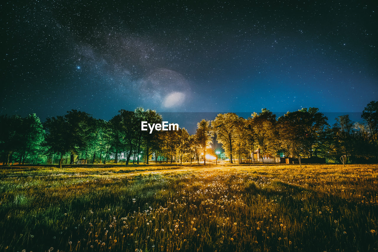 night, plant, tree, star - space, field, sky, scenics - nature, beauty in nature, space, land, landscape, tranquility, astronomy, tranquil scene, environment, nature, star, growth, no people, grass, outdoors, milky way