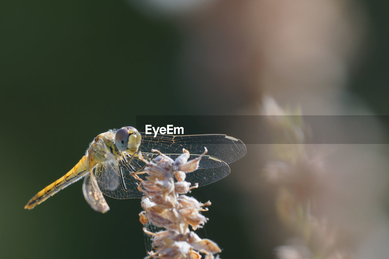 Close-up of insect dragonfly