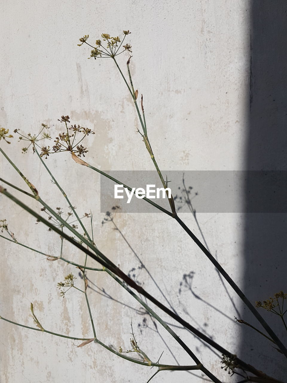 no people, growth, plant, day, nature, outdoors, leaf, close-up, architecture, flower, fragility, freshness