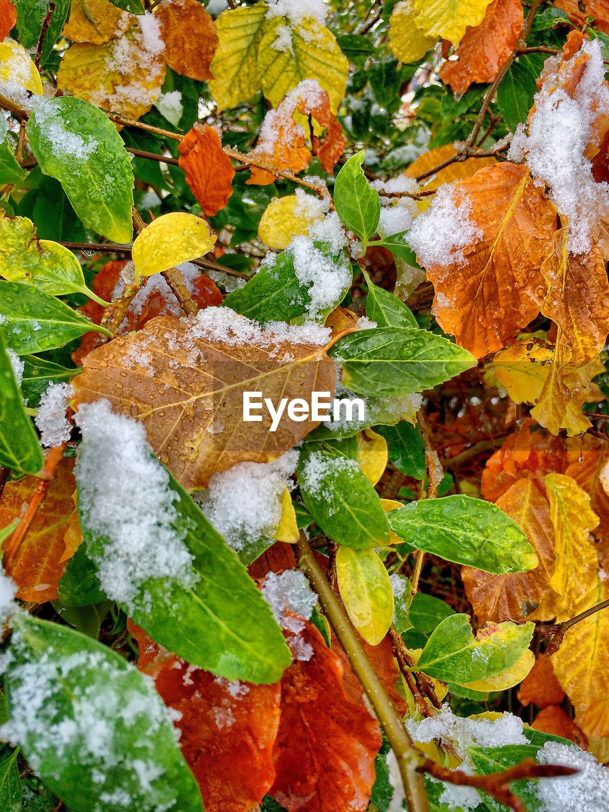 High angle view of snow on autumn plants