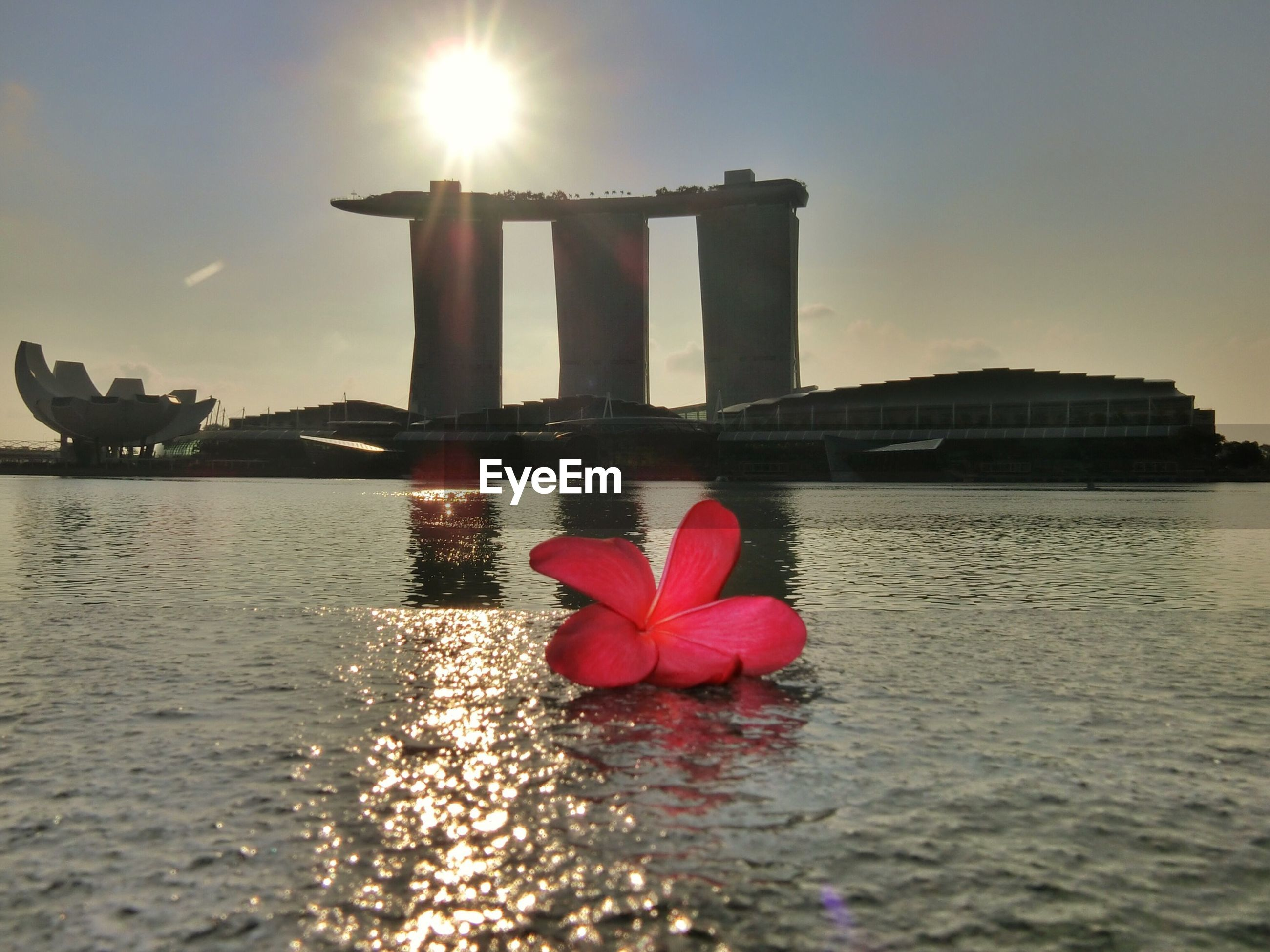 Red frangipani on river with art science museum and marina bay sands hotel at sunset