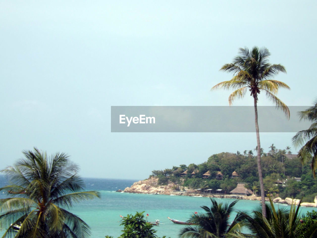 palm tree, tree, beauty in nature, scenics, tranquil scene, sea, tranquility, nature, beach, sky, tree trunk, growth, no people, day, water, outdoors, horizon over water