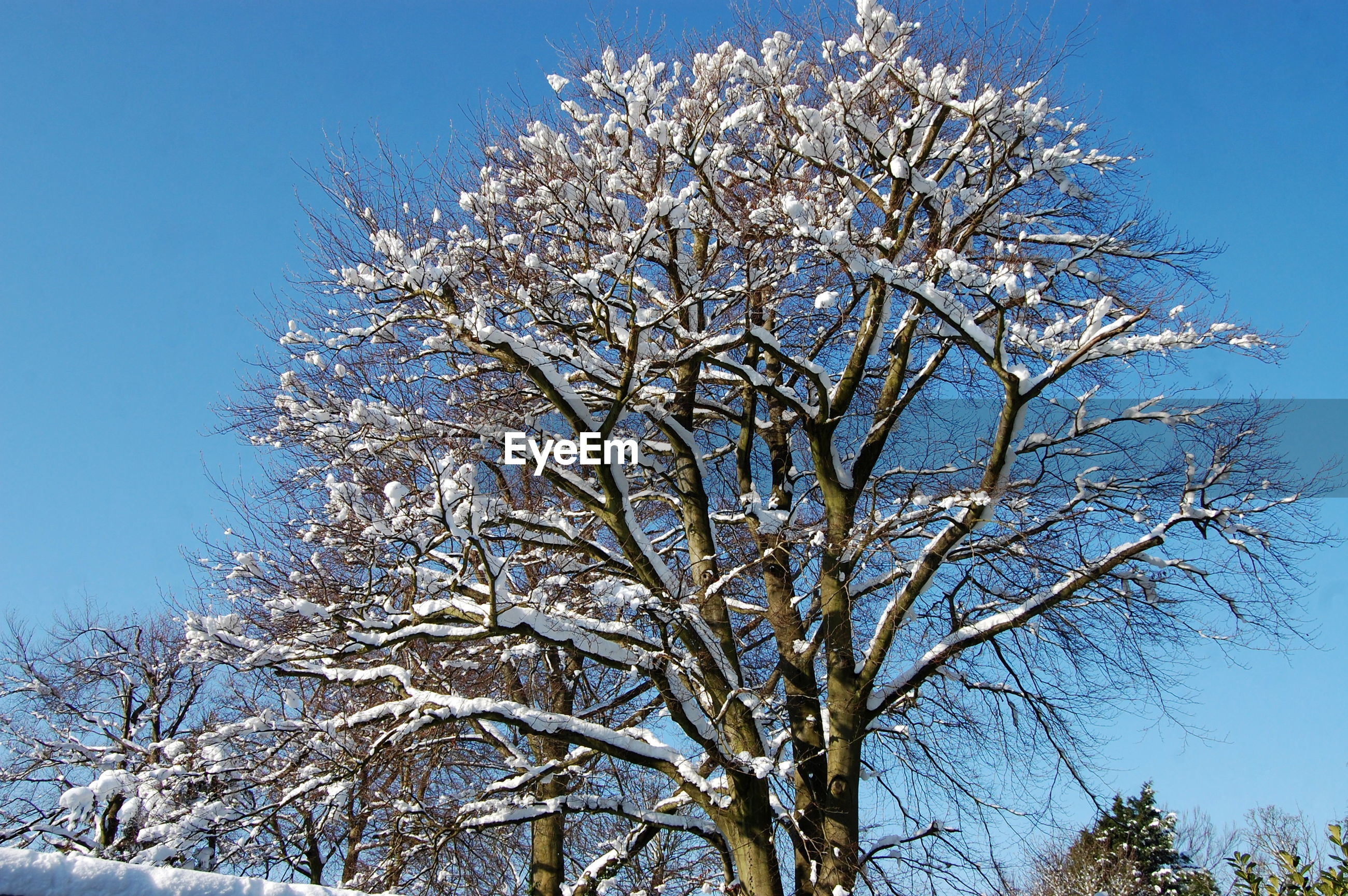 low angle view, blue, clear sky, tree, beauty in nature, branch, scenics, nature, growth, bare tree, white, tranquility, day, tranquil scene, tree trunk, sky, outdoors, high section, solitude, non-urban scene, majestic, springtime, remote, treetop, no people, tall, in bloom
