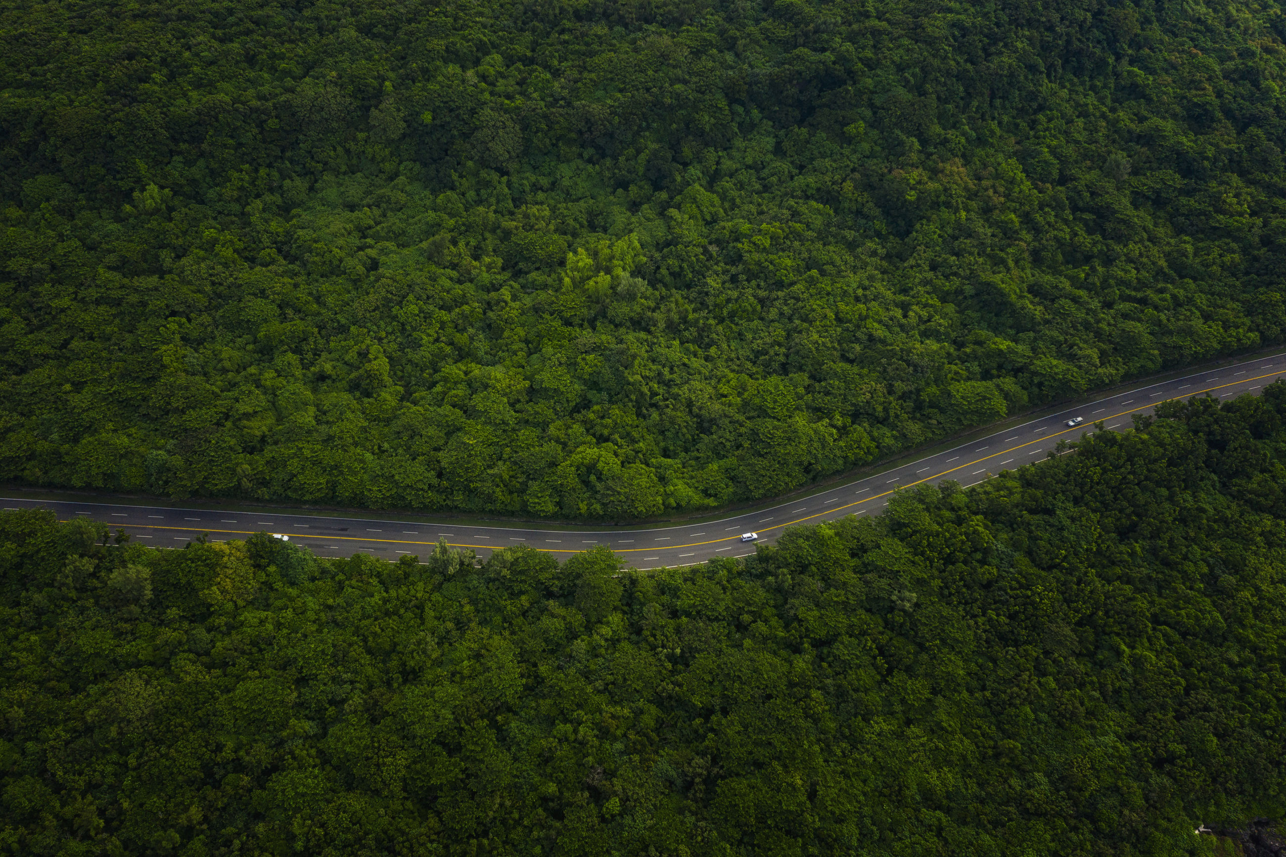 SCENIC VIEW OF ROAD AMIDST TREES