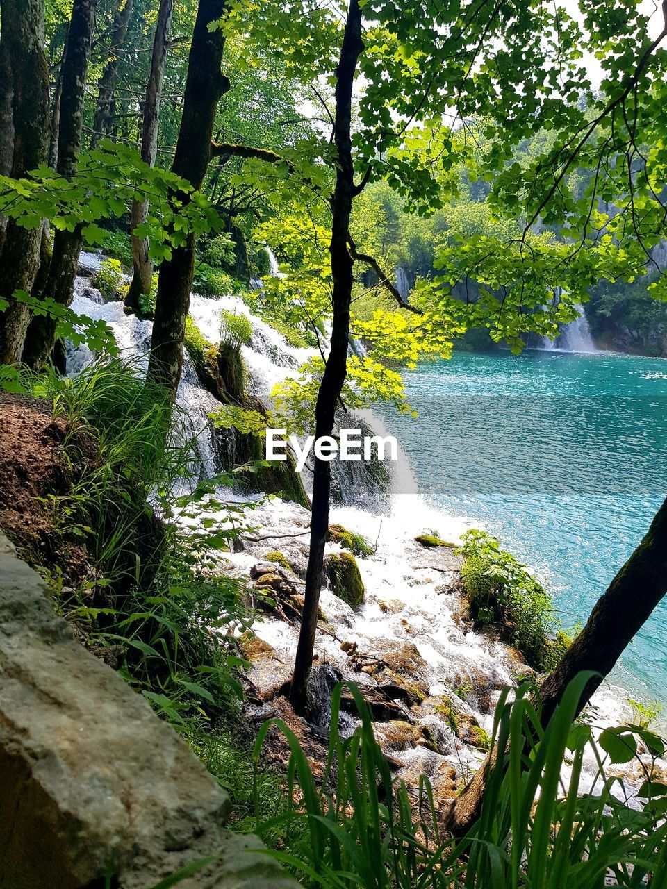 water, tree, plant, beauty in nature, forest, scenics - nature, land, nature, tranquility, flowing water, growth, green color, day, no people, motion, river, tranquil scene, waterfall, flowing, outdoors