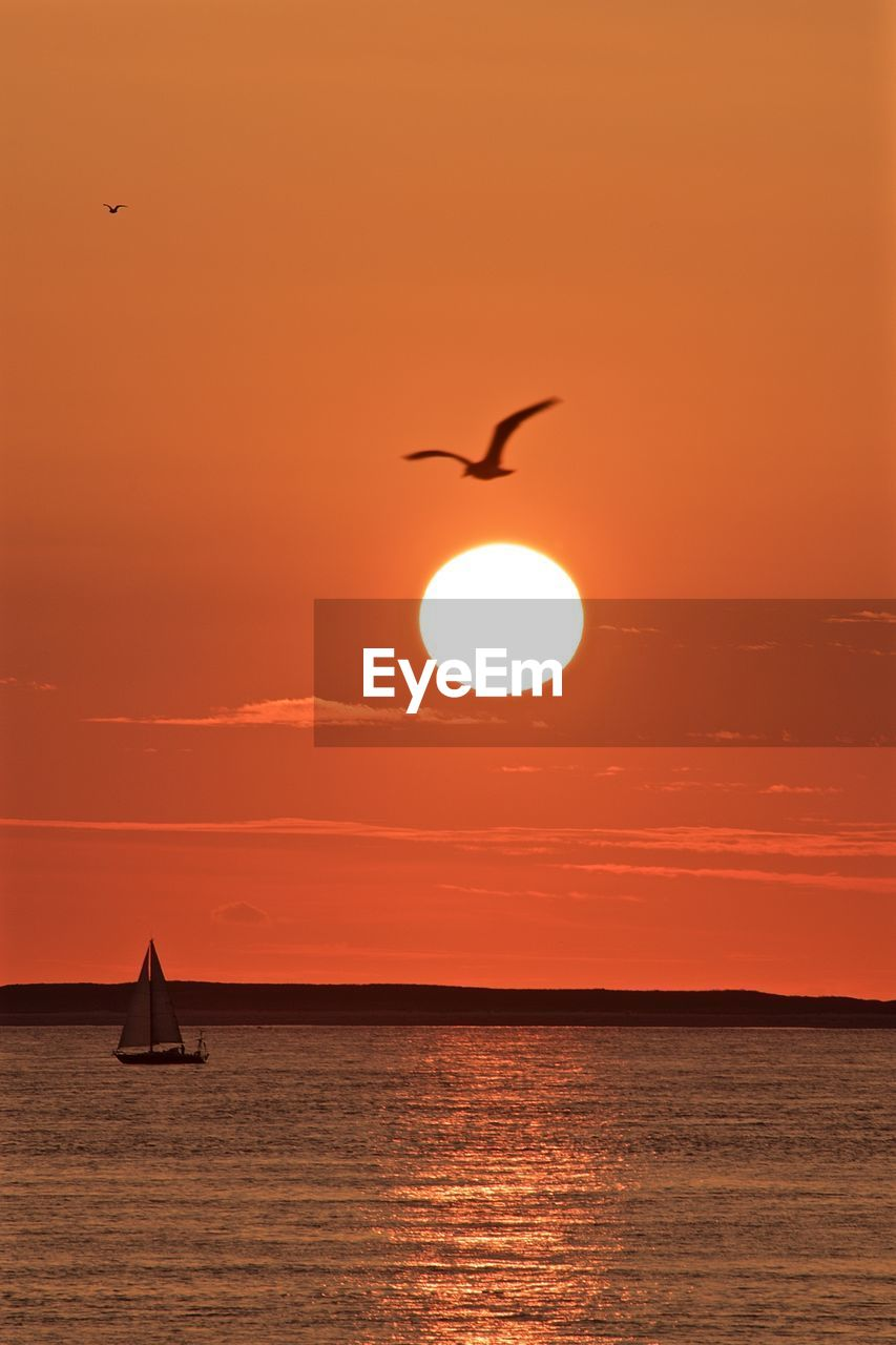 sky, water, sunset, bird, beauty in nature, vertebrate, orange color, animal themes, sun, scenics - nature, sea, silhouette, animal, flying, animal wildlife, animals in the wild, waterfront, tranquil scene, tranquility, horizon over water, no people, outdoors, sailboat