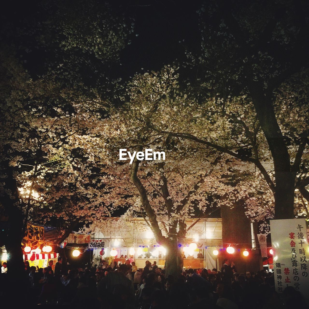 tree, night, illuminated, large group of people, real people, celebration, arts culture and entertainment, men, outdoors, crowd, enjoyment, branch, women, nightlife, photographing, togetherness, popular music concert, nature, people