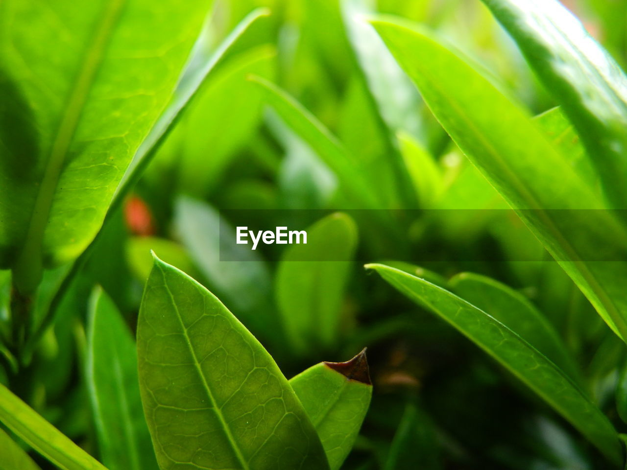 leaf, green color, growth, plant, nature, close-up, day, outdoors, no people, beauty in nature, freshness, fragility, animal themes