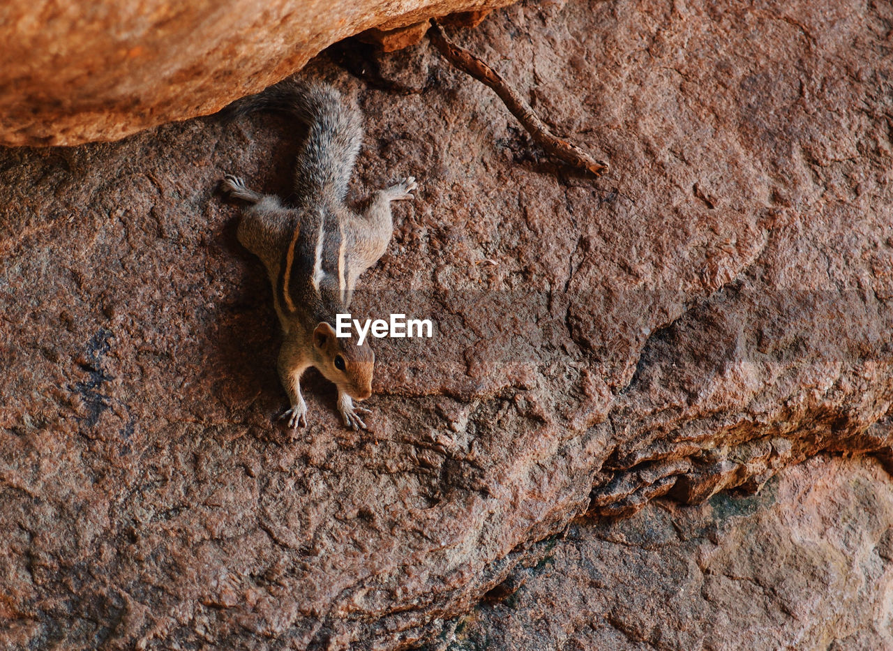 High angle view of chipmunk on rock formation