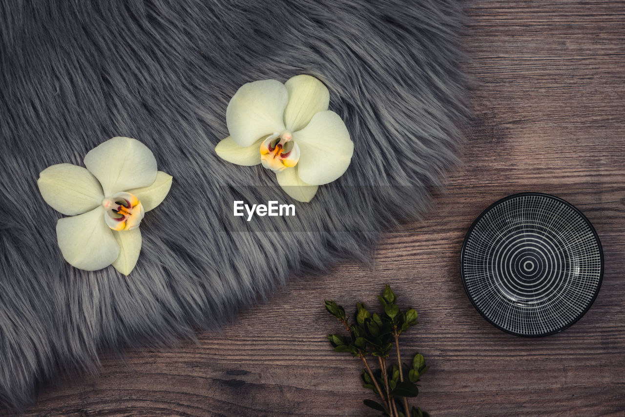 Orchids on a wooden board with little tea plates
