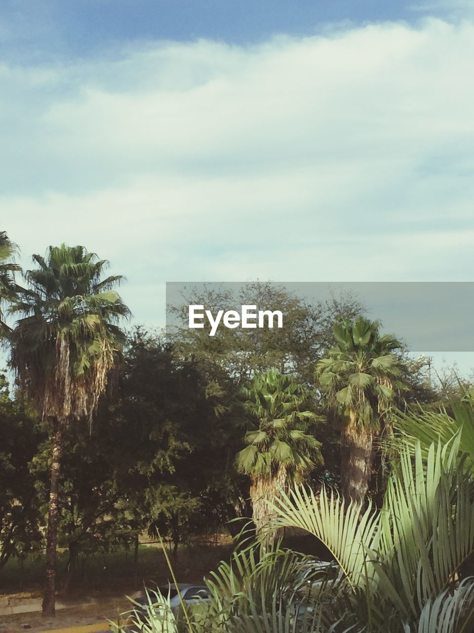 plant, sky, tree, growth, nature, beauty in nature, tranquility, cloud - sky, palm tree, tropical climate, day, tranquil scene, no people, scenics - nature, land, outdoors, environment, green color, water, non-urban scene, palm leaf