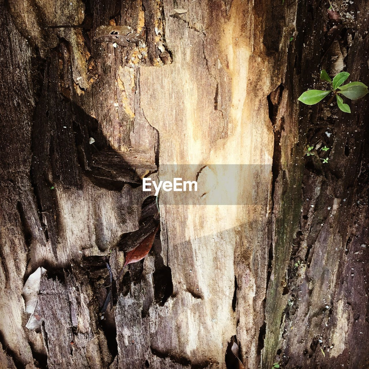 nature, rock - object, textured, cave, stalactite, no people, tree trunk, beauty in nature, close-up, outdoors, day
