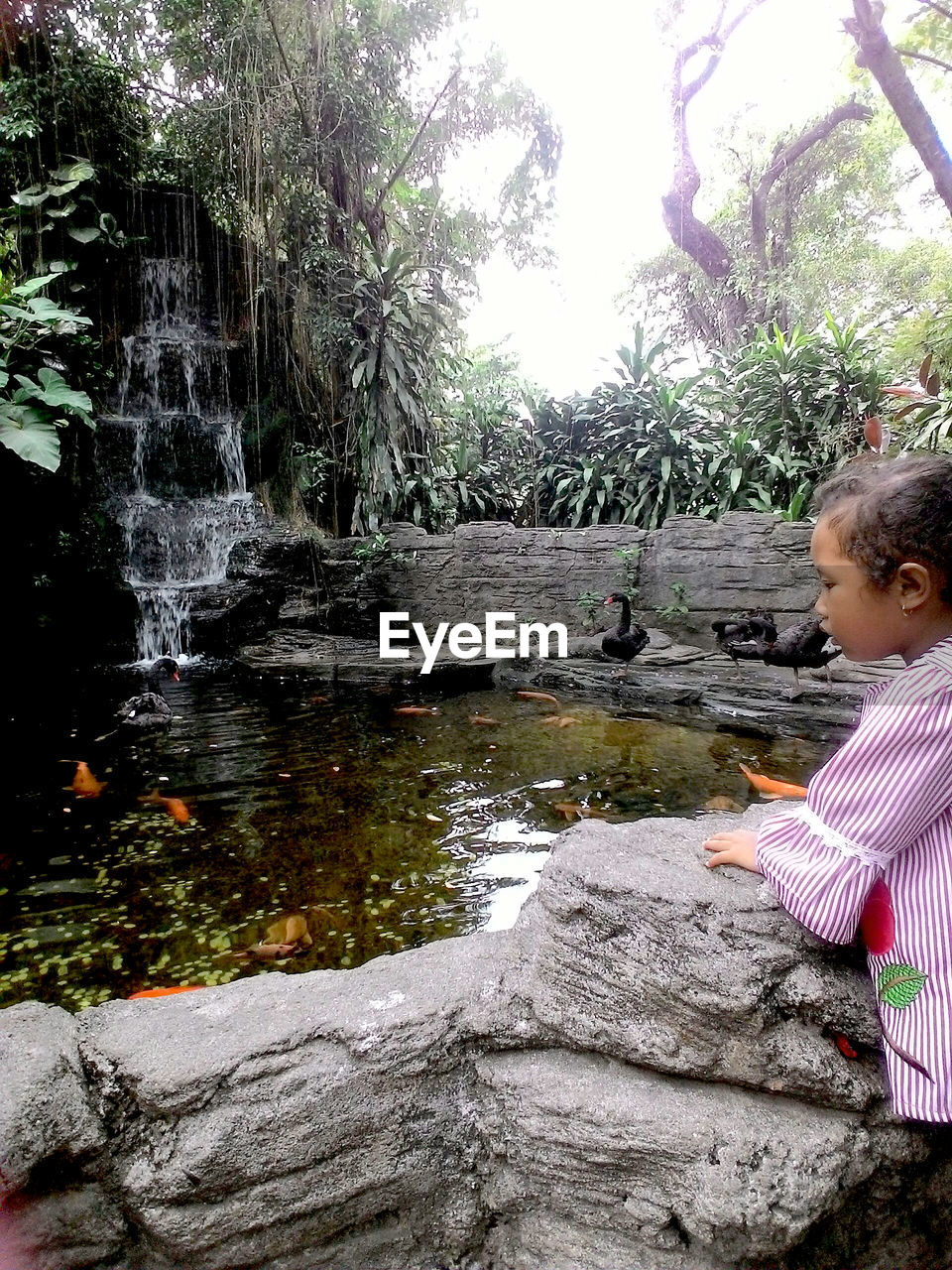water, child, childhood, real people, tree, one person, plant, nature, day, leisure activity, casual clothing, side view, lifestyles, standing, solid, boys, motion, girls, outdoors, innocence, flowing water