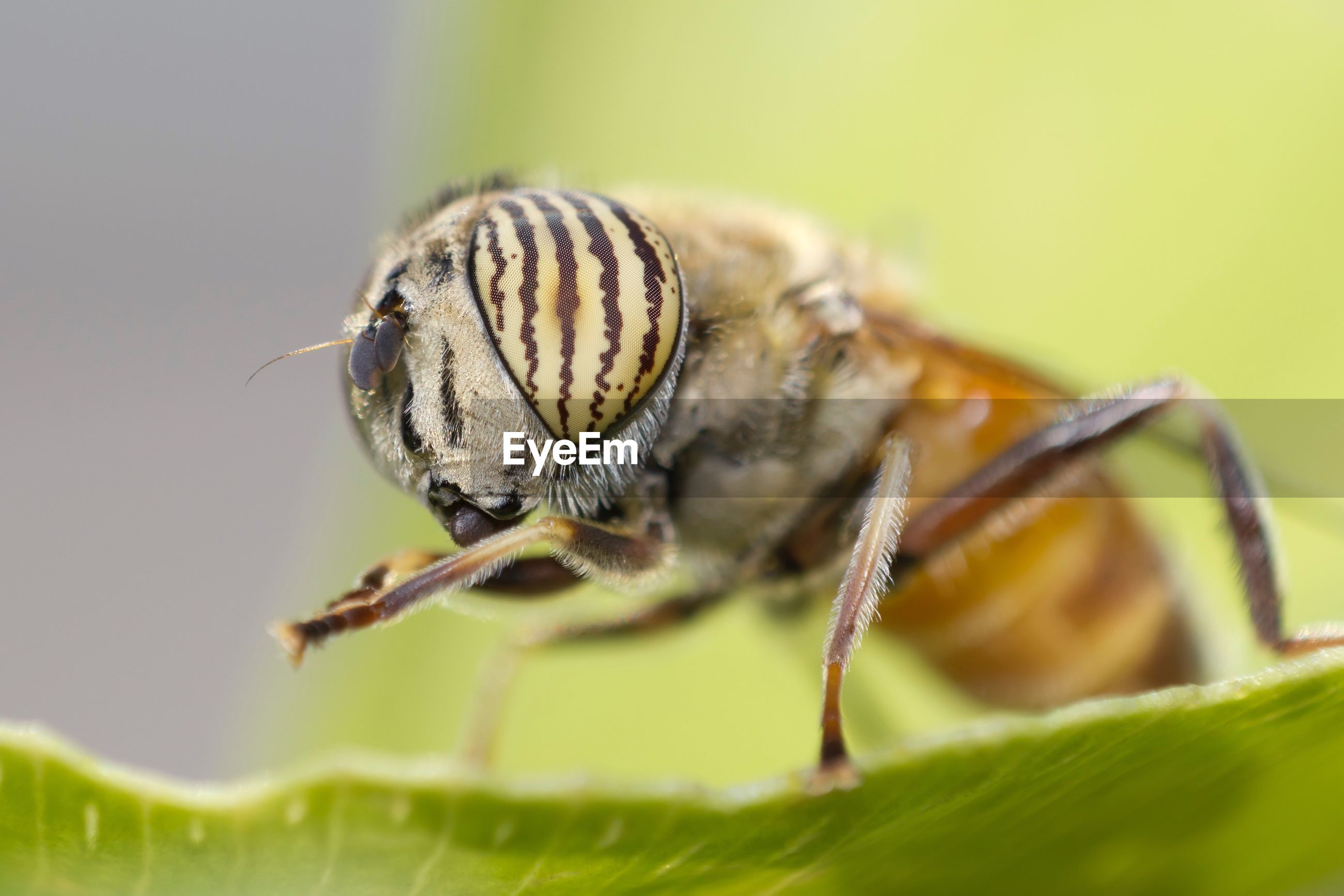 Extreme close-up of insect on leaf