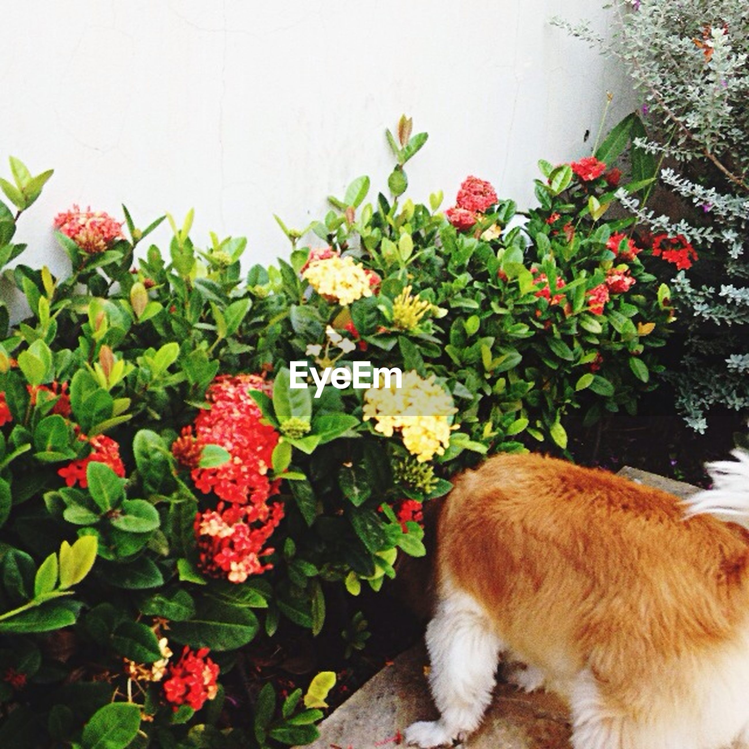 flower, domestic animals, pets, animal themes, one animal, dog, mammal, fragility, freshness, petal, plant, growth, high angle view, leaf, nature, no people, beauty in nature, pink color, white color, day