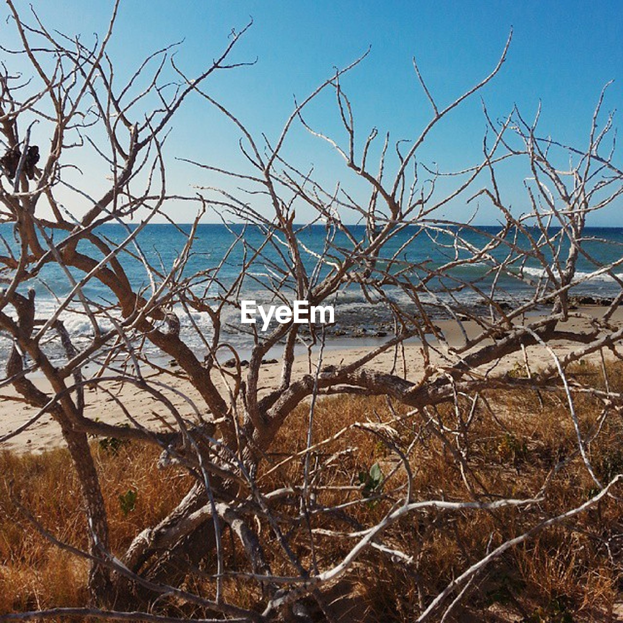 bare tree, branch, tree, clear sky, sky, dead plant, dry, nature, field, tranquility, landscape, day, no people, outdoors, tranquil scene, dried plant, wood - material, sunlight, blue, scenics