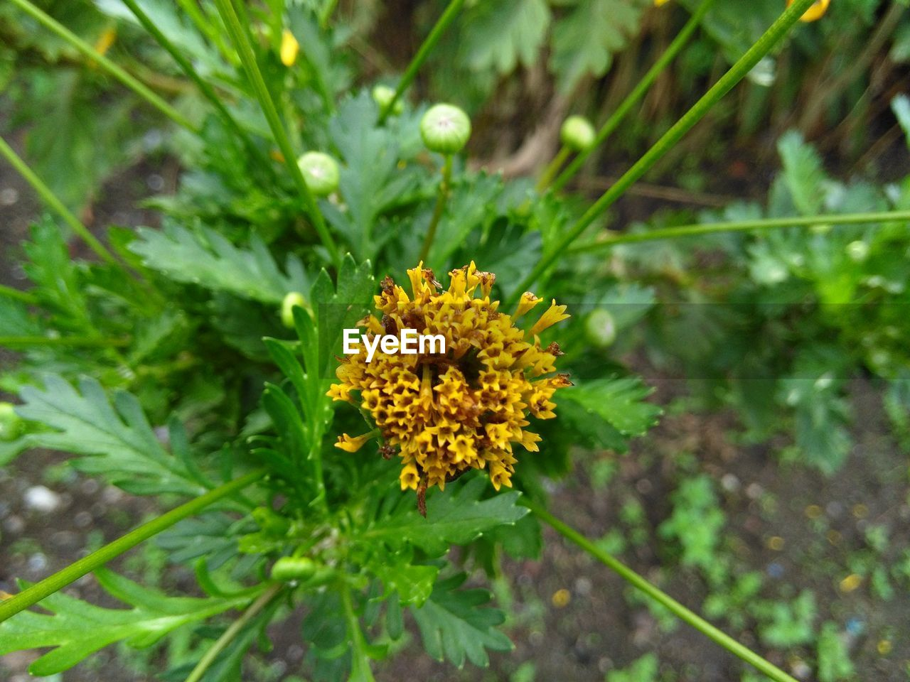 flower, growth, yellow, nature, green color, plant, freshness, fragility, outdoors, beauty in nature, leaf, no people, day, flower head, close-up