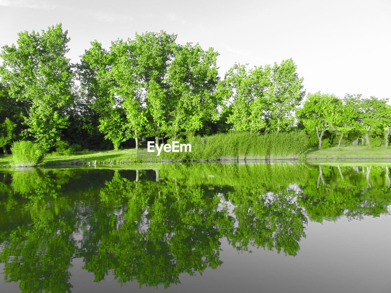 plant, reflection, lake, water, tree, green color, tranquility, beauty in nature, nature, waterfront, growth, tranquil scene, sky, no people, scenics - nature, symmetry, day, outdoors, standing water, floating on water, reflection lake