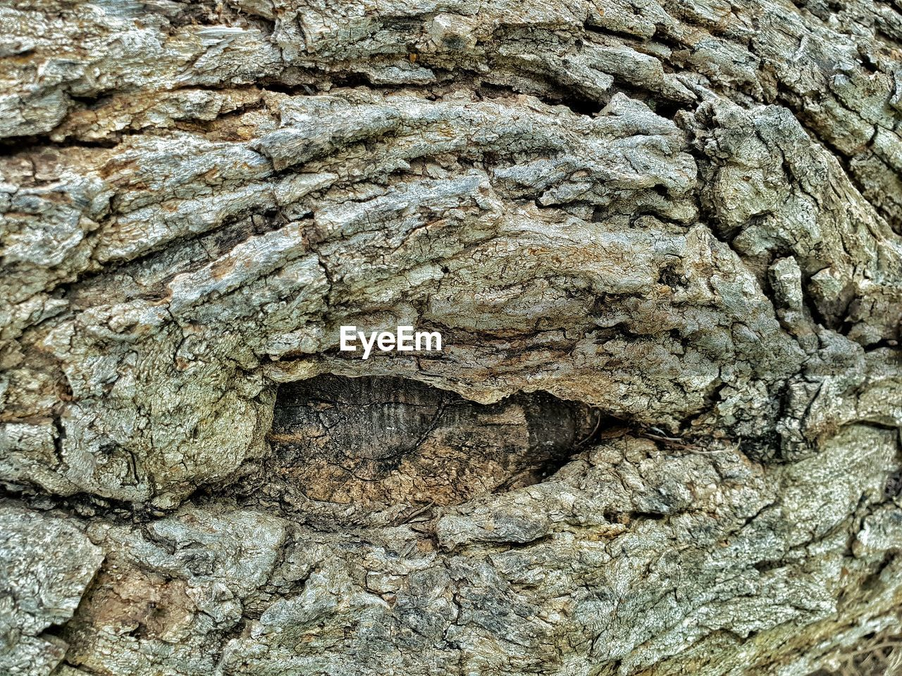 textured, rough, backgrounds, full frame, close-up, tree trunk, no people, trunk, tree, day, nature, plant bark, pattern, natural pattern, plant, outdoors, brown, bark, geology, low angle view