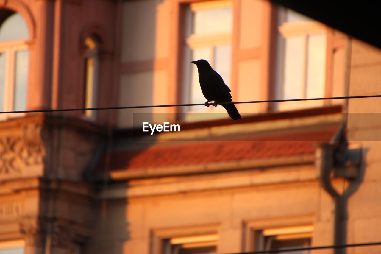 bird, one animal, vertebrate, architecture, built structure, animal, animal wildlife, animal themes, animals in the wild, building exterior, no people, perching, low angle view, focus on foreground, outdoors, orange color, building, day, sunset, nature