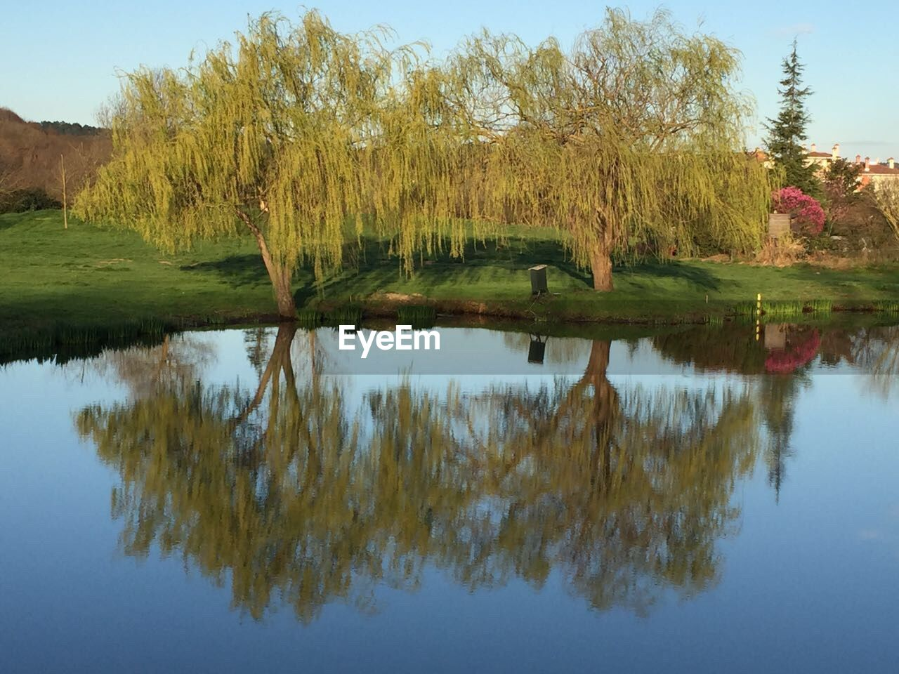 reflection, tree, water, lake, tranquil scene, nature, tranquility, beauty in nature, scenics, waterfront, outdoors, no people, day, growth, sky, grass, animal themes, bird