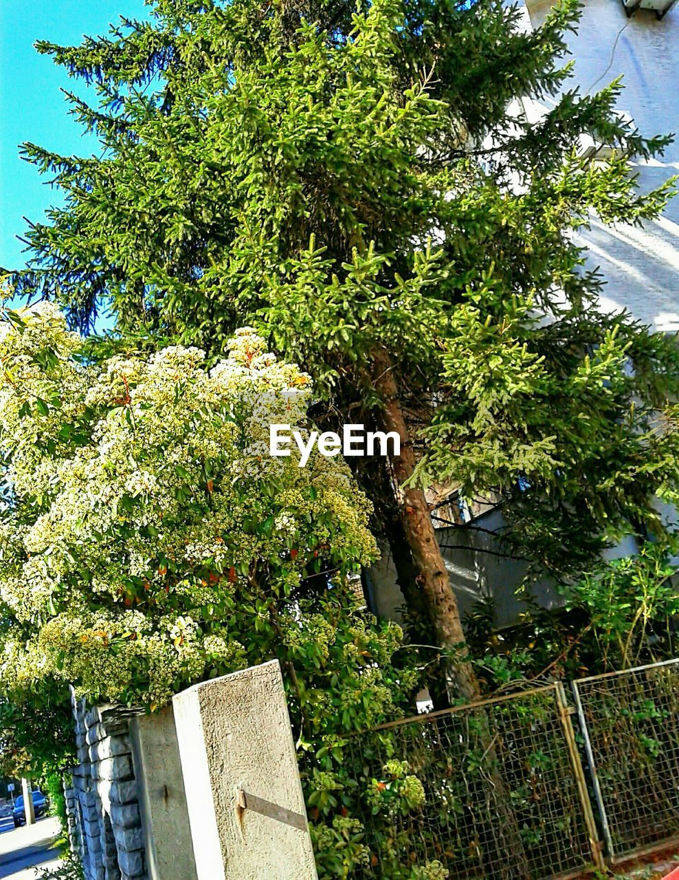 plant, tree, built structure, growth, architecture, nature, building exterior, day, green color, outdoors, sunlight, no people, sky, building, beauty in nature, city, boundary, fence, flowering plant, barrier
