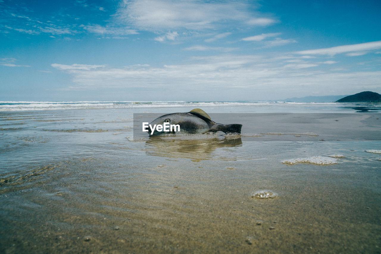 Dead fish on shore at beach