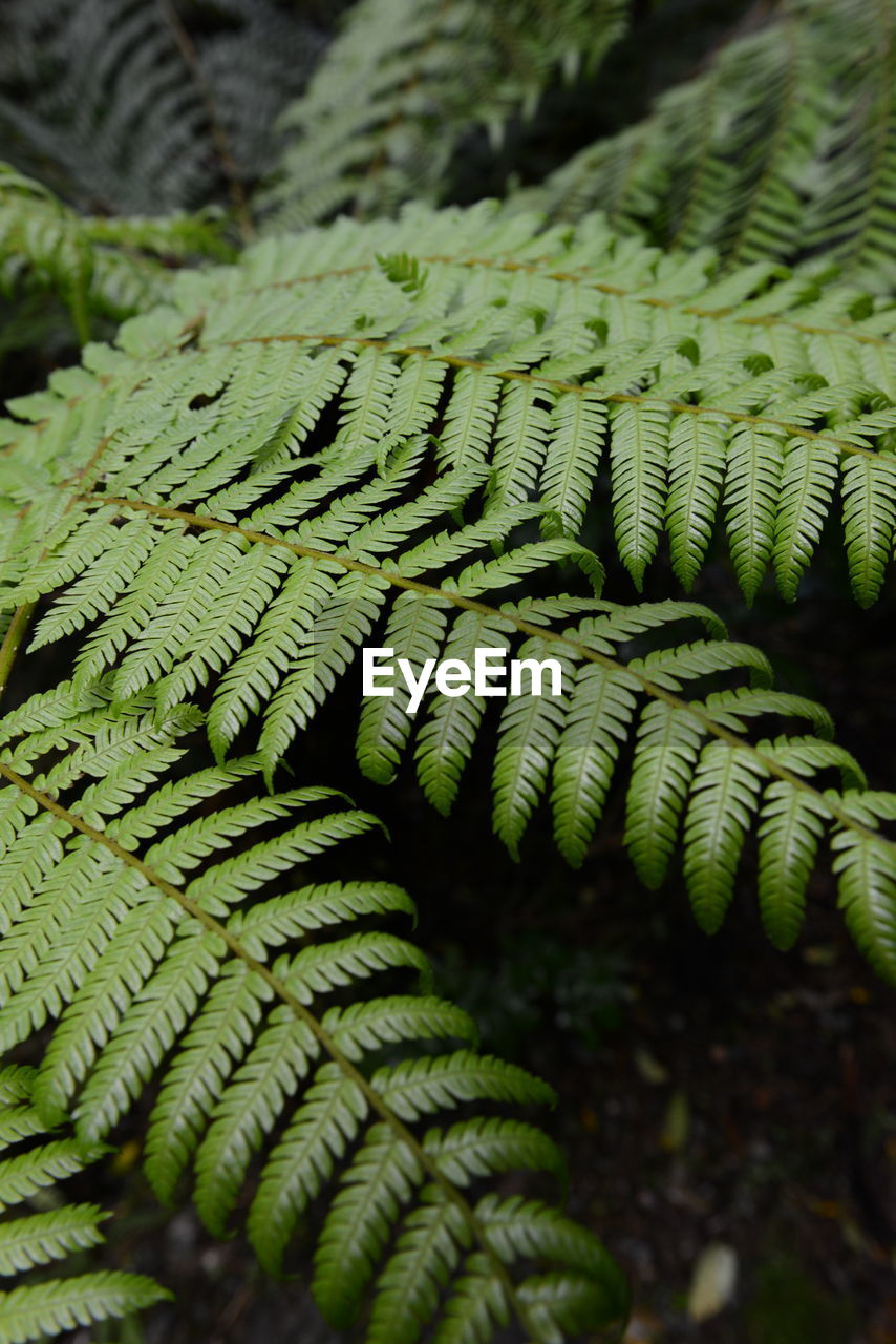 green color, growth, close-up, plant, no people, selective focus, fern, beauty in nature, nature, day, leaf, natural pattern, focus on foreground, pattern, plant part, fragility, detail, outdoors, vulnerability, textured