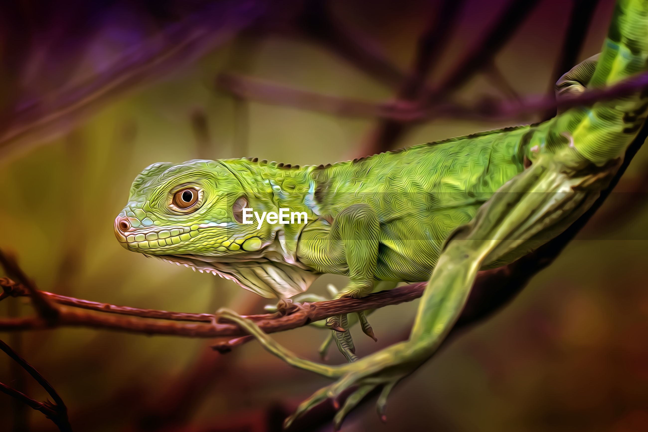 Close-up of green lizard on branch
