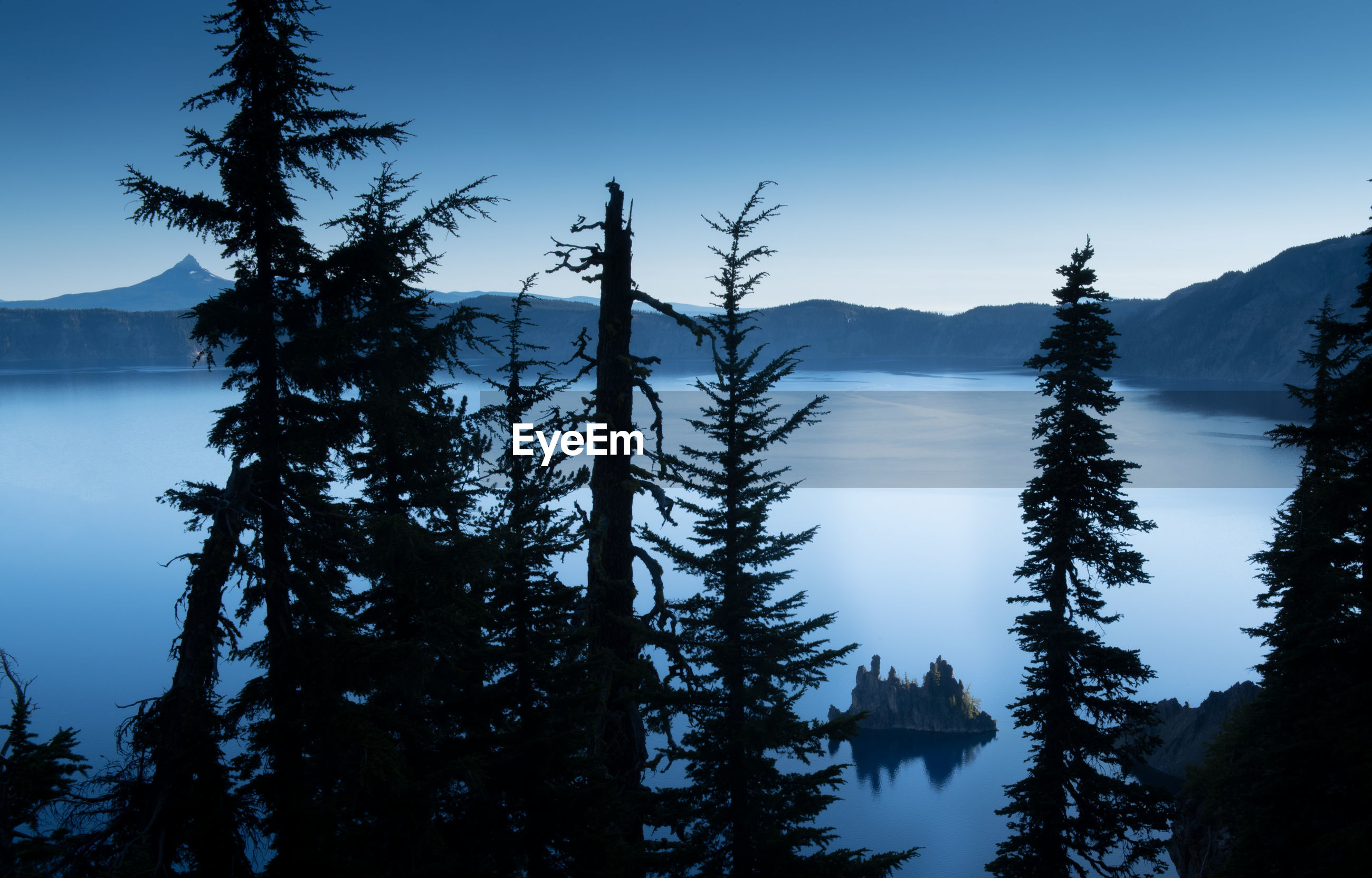 SCENIC VIEW OF PINE TREES BY LAKE AGAINST SKY