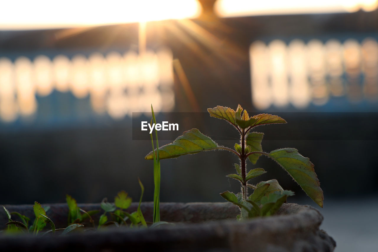 leaf, plant part, nature, close-up, plant, growth, selective focus, no people, focus on foreground, beauty in nature, outdoors, architecture, green color, sunlight, built structure, day, illuminated, sunset, plant stem, building exterior, leaves