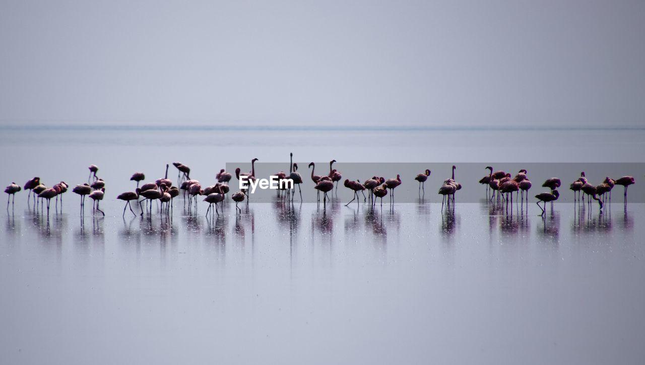 Flock Of Flamingoes At Lake Natron