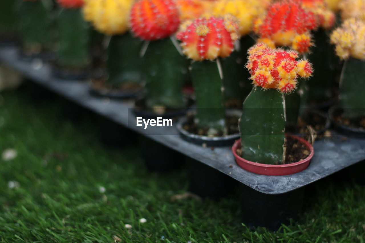 plant, flowering plant, flower, green color, freshness, growth, nature, selective focus, beauty in nature, grass, close-up, day, no people, fragility, vulnerability, outdoors, field, focus on foreground, petal, leaf, flower head, flower pot