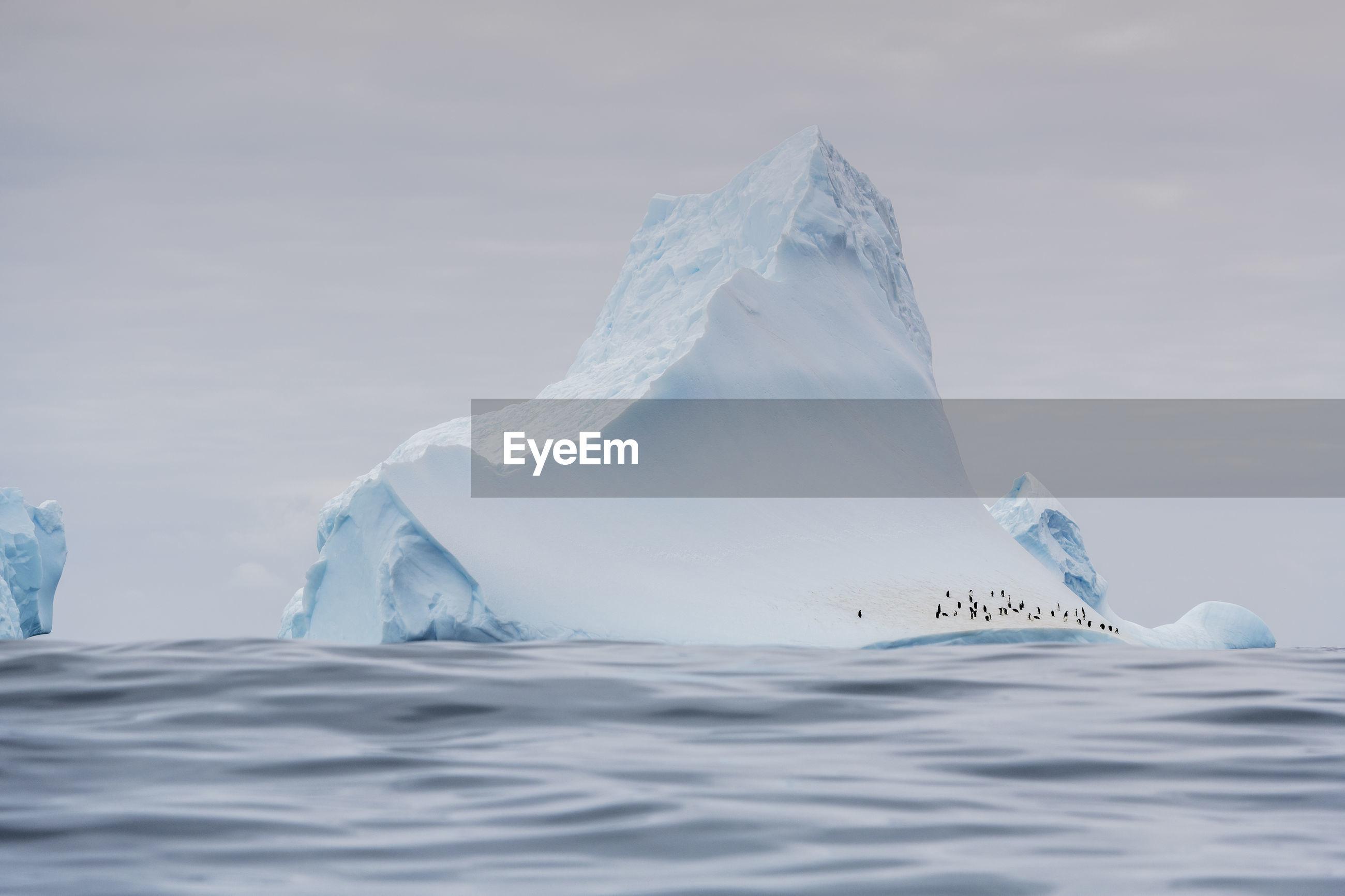 Chinstrap penguins on an iceberg of the coast of elephant island, antarctica.