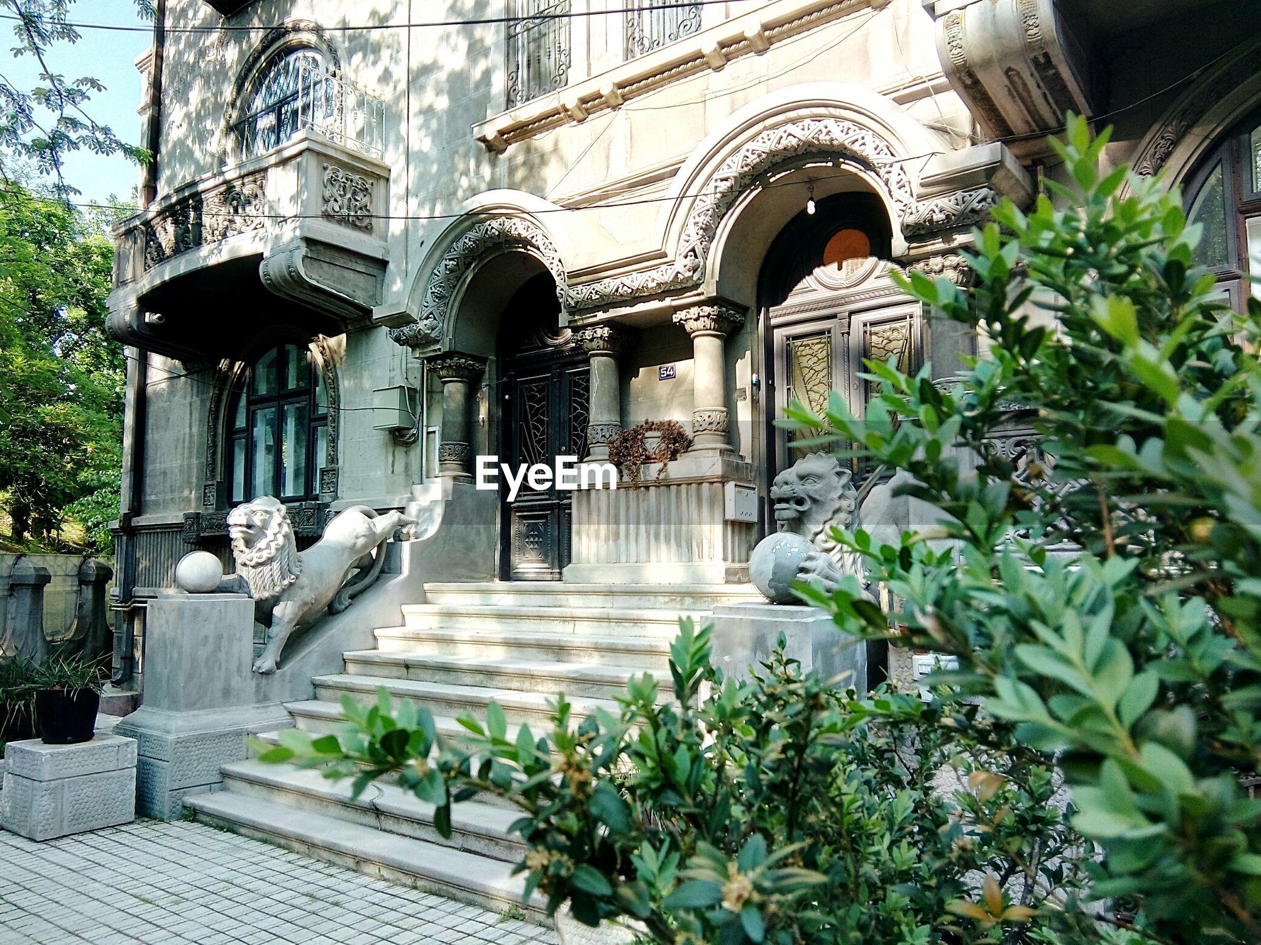 Plants against historic building