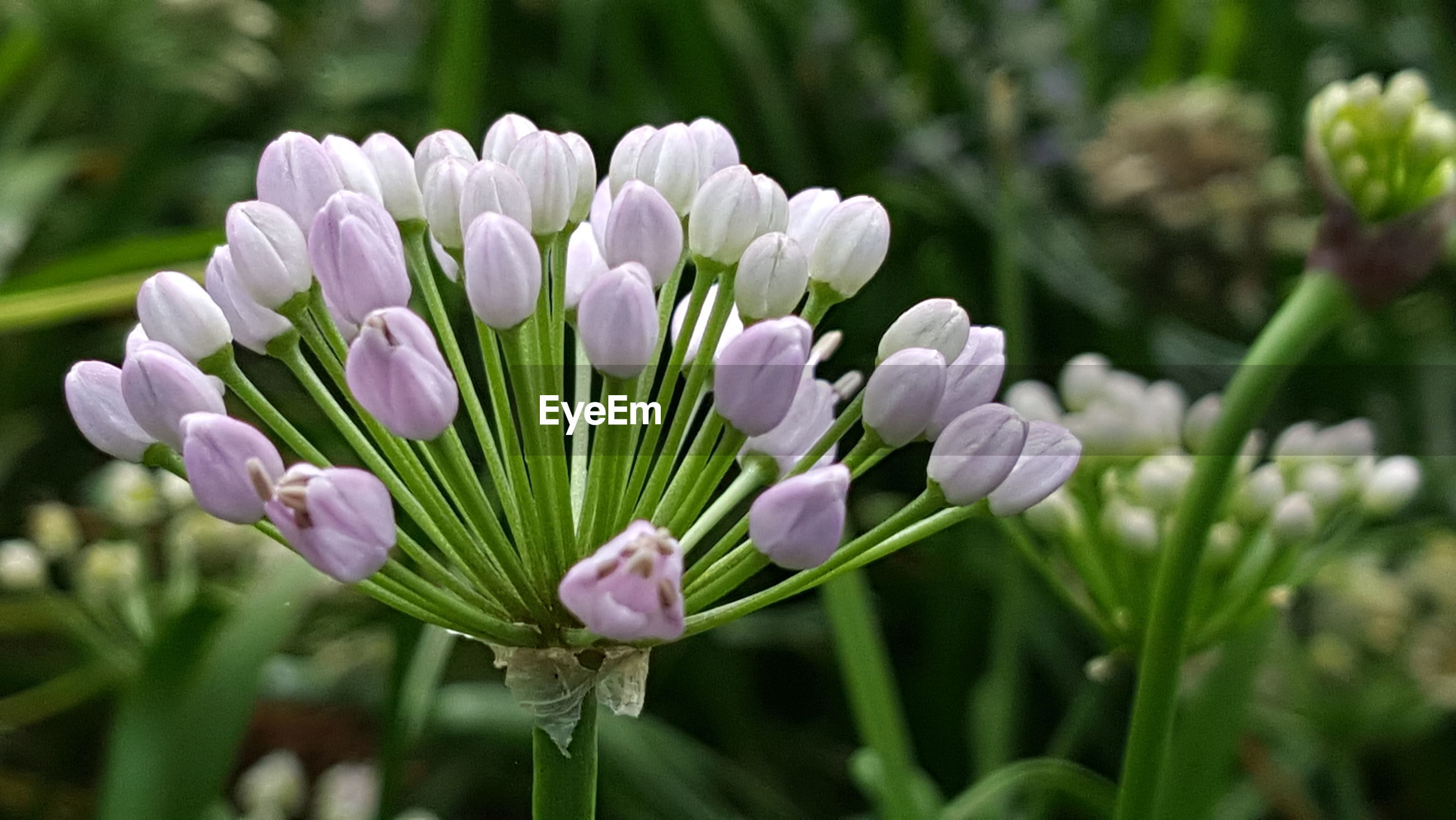 CLOSE-UP OF FLOWERS BLOOMING