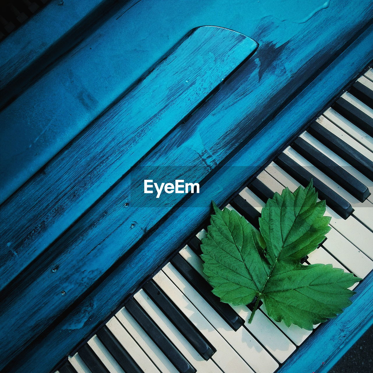 High angle view of leaves on piano
