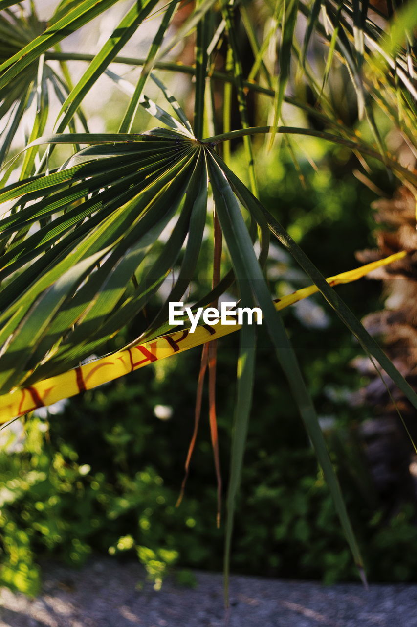plant, growth, green color, beauty in nature, nature, leaf, day, plant part, close-up, focus on foreground, no people, tree, outdoors, water, branch, selective focus, tranquility, sunlight, freshness, blade of grass, palm leaf, coniferous tree