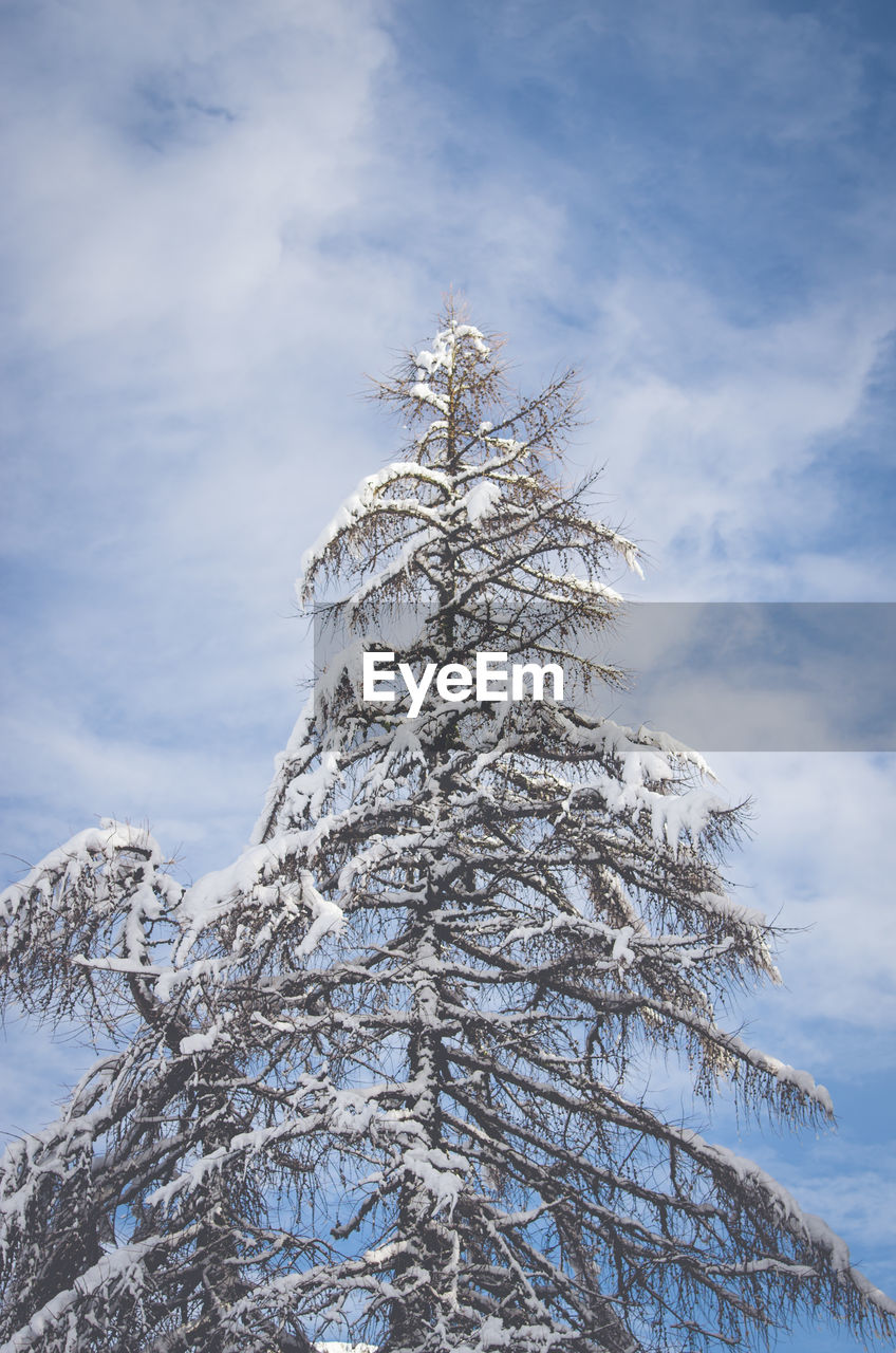 winter, snow, cold temperature, tree, day, sky, nature, no people, outdoors, low angle view, tranquility, branch, beauty in nature, cloud - sky, bare tree, scenics, spruce tree, close-up