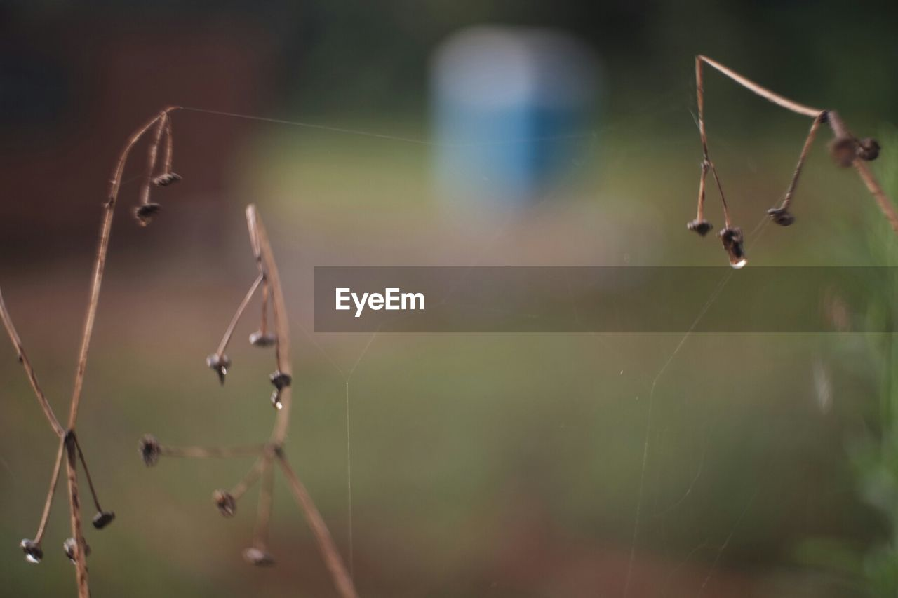 spider web, focus on foreground, nature, spider, no people, web, close-up, outdoors, day, insect, plant, one animal, beauty in nature, animal themes, growth, fragility