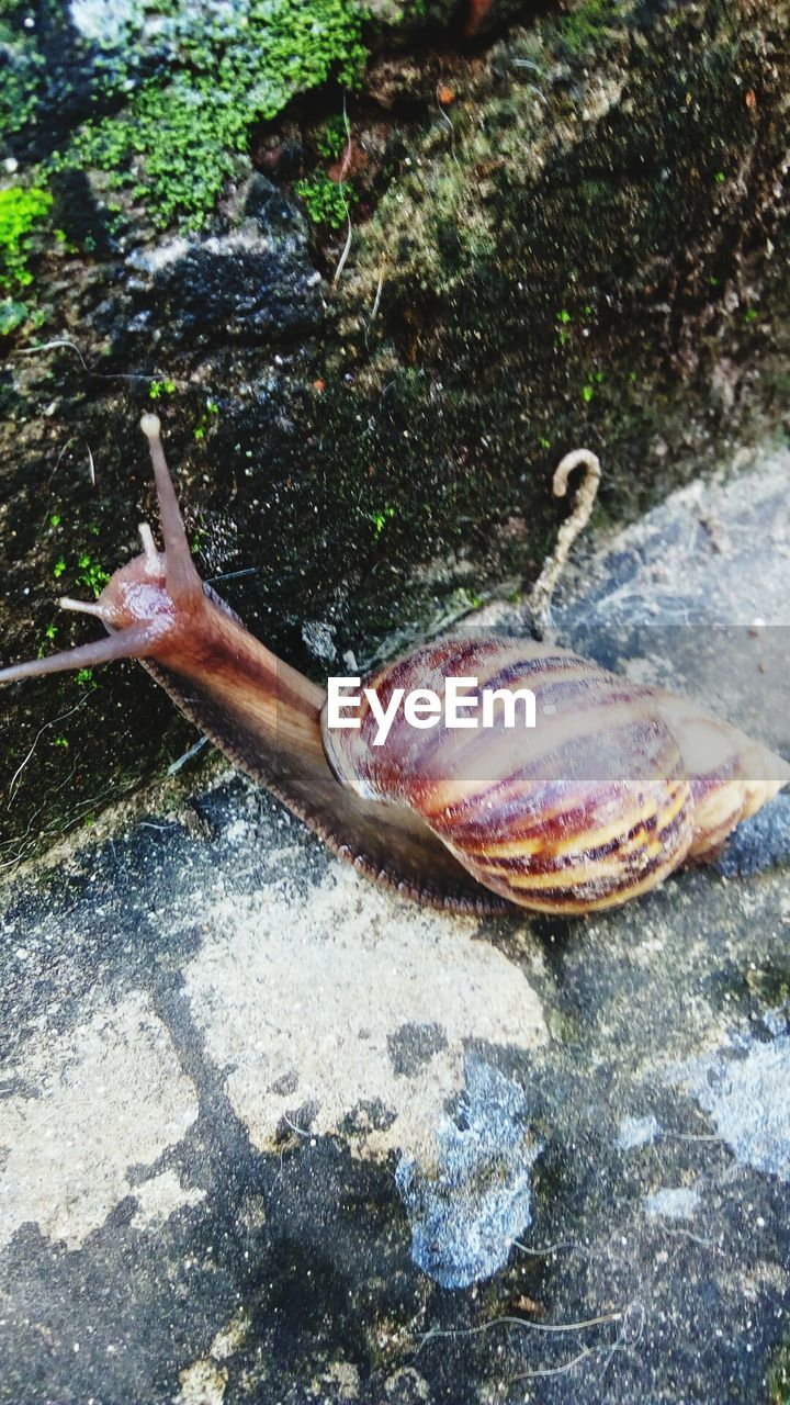 one animal, animal themes, animals in the wild, day, outdoors, nature, real people, high angle view, one person, close-up, water, slug, sea life