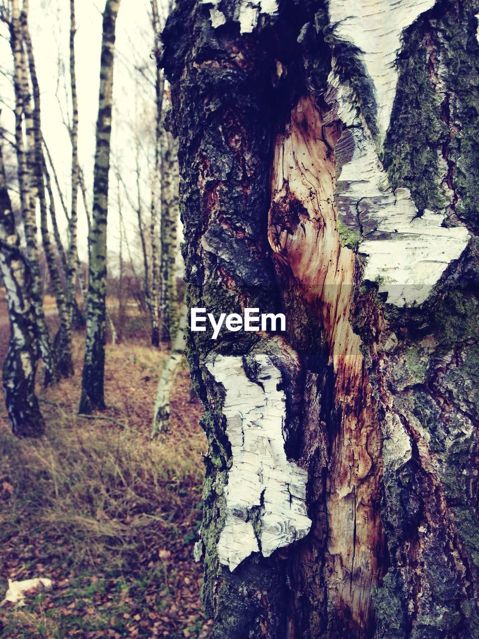 tree trunk, tree, bark, nature, textured, no people, forest, day, wood - material, outdoors, close-up, growth, tree stump, marking, dead tree, fungus, beauty in nature