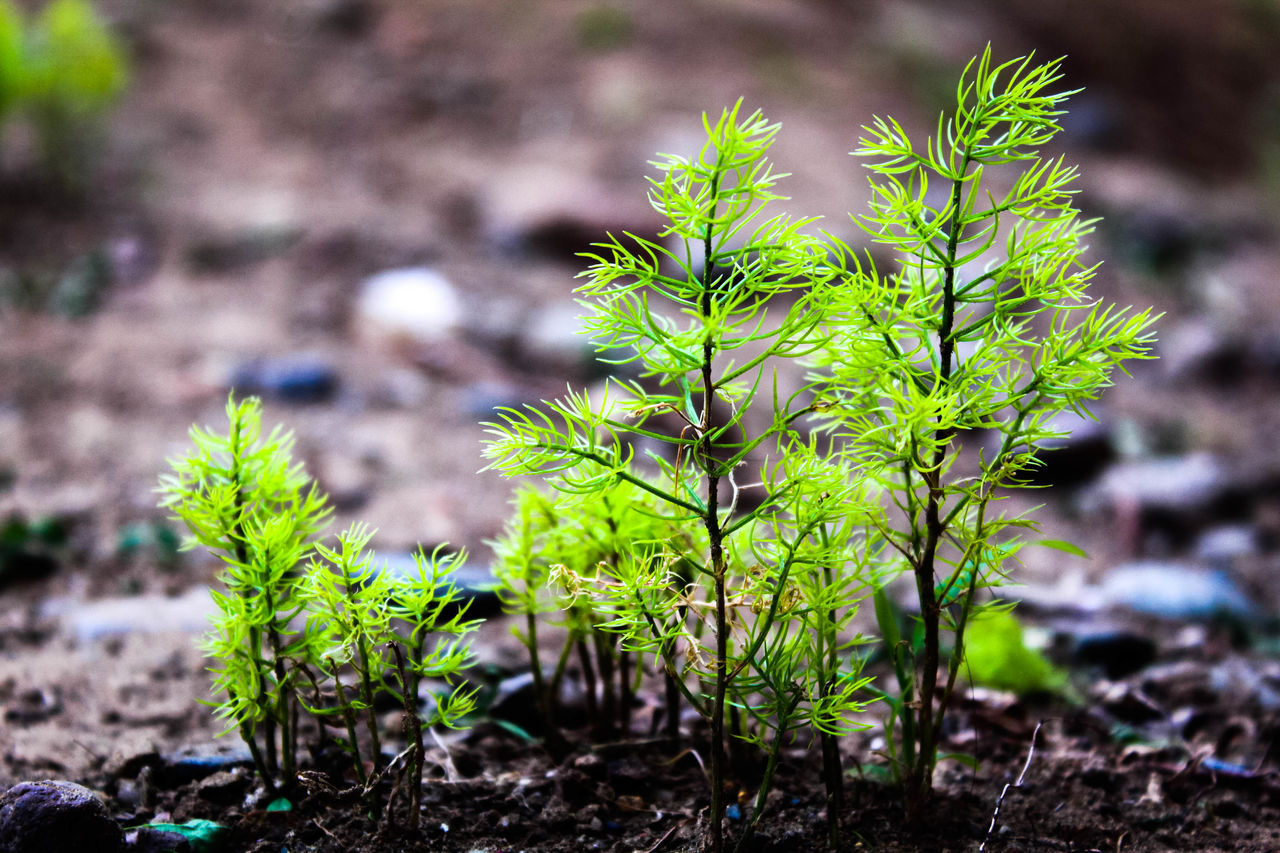 growth, plant, plant part, green color, leaf, nature, day, focus on foreground, beauty in nature, close-up, no people, land, tranquility, outdoors, selective focus, field, fragility, vulnerability, freshness, beginnings