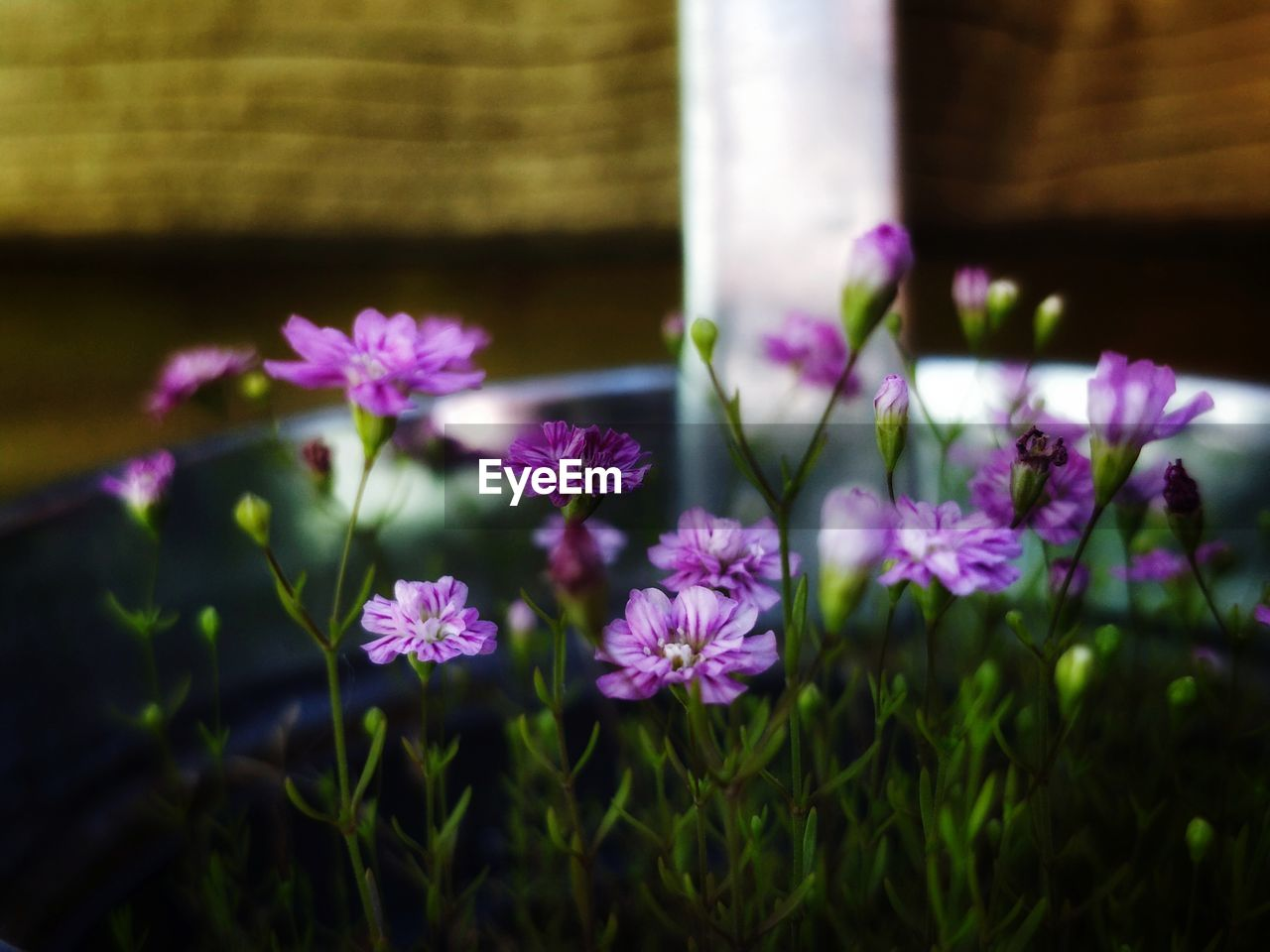 flower, flowering plant, freshness, plant, fragility, beauty in nature, vulnerability, growth, close-up, petal, nature, no people, flower head, selective focus, inflorescence, day, outdoors, pink color, purple, plant stem
