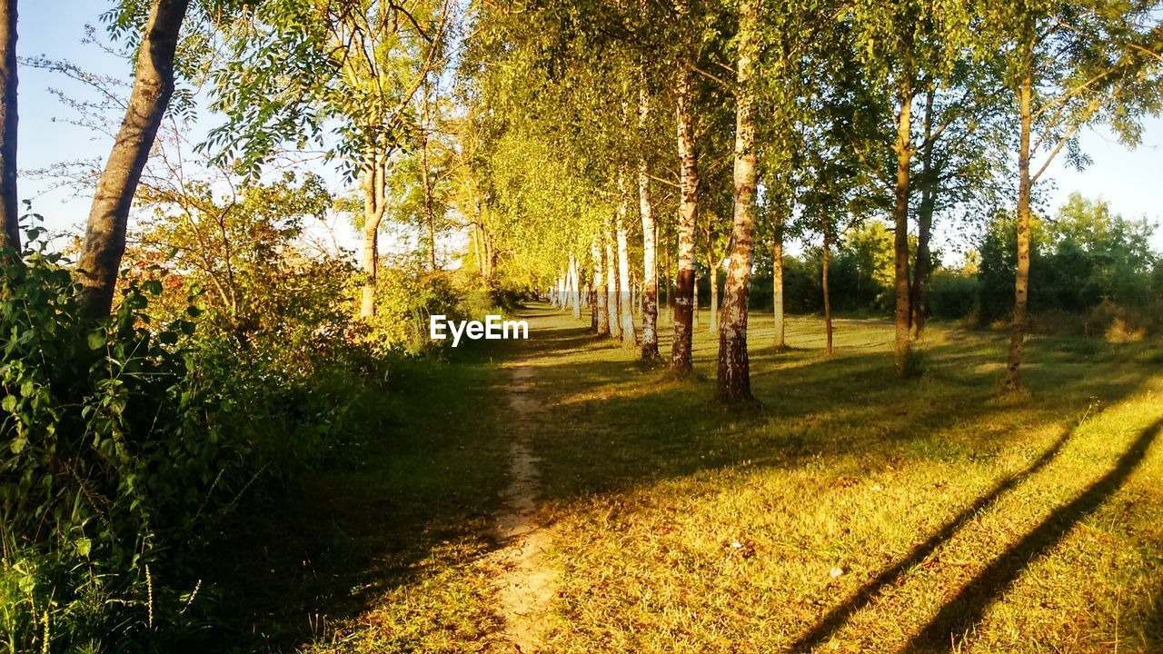 tree, nature, tranquility, growth, autumn, sunlight, day, tranquil scene, scenics, outdoors, no people, beauty in nature, shadow, field, change, the way forward, landscape, grass, forest, sky