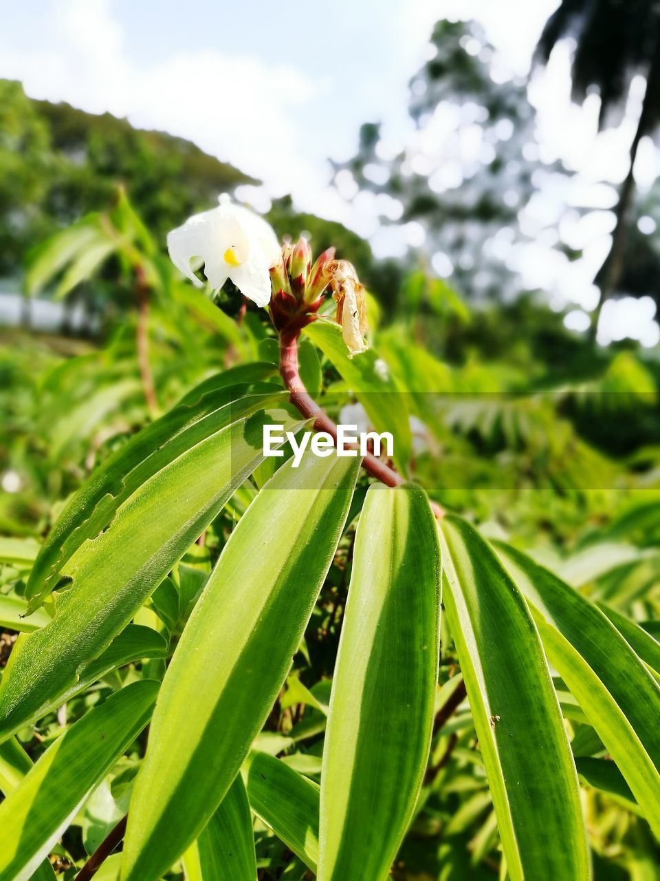 green color, growth, nature, leaf, plant, no people, beauty in nature, focus on foreground, close-up, flower, day, outdoors, fragility, freshness, animal themes, flower head