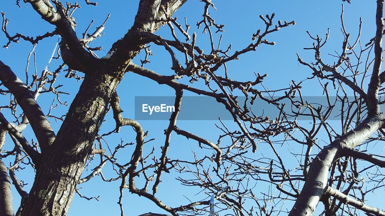tree, branch, low angle view, nature, bare tree, day, outdoors, no people, clear sky, beauty in nature, tree trunk, sky, growth, blue