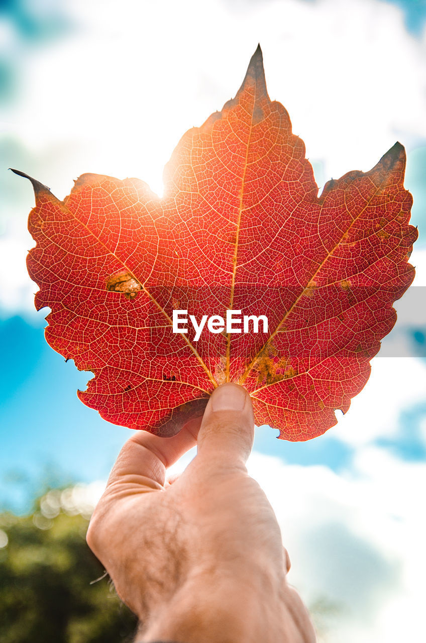 human hand, human body part, hand, one person, real people, personal perspective, close-up, body part, leaf, finger, plant part, holding, nature, unrecognizable person, autumn, human finger, day, leaf vein, lifestyles, change, outdoors, maple leaf, leaves, human limb