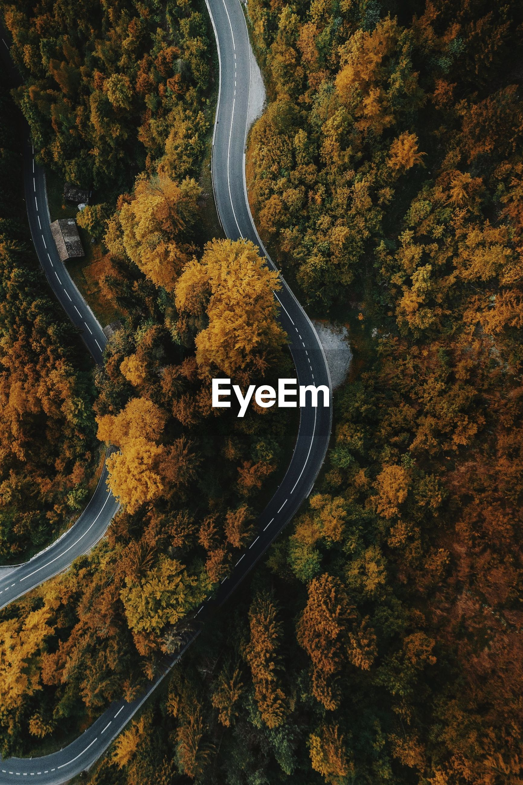 HIGH ANGLE VIEW OF ROAD BY AUTUMN TREES
